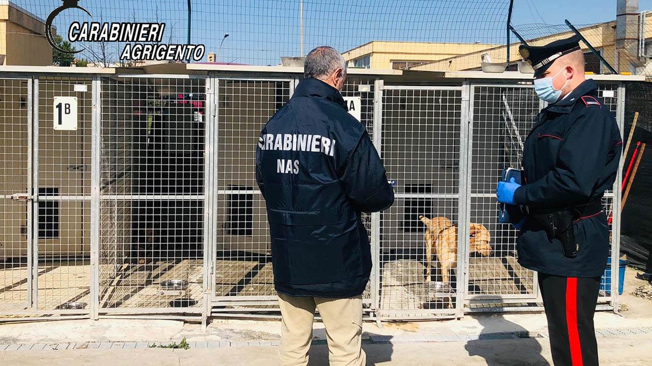 Sequestrato un canile a Canicattì: accertate diverse irregolarità