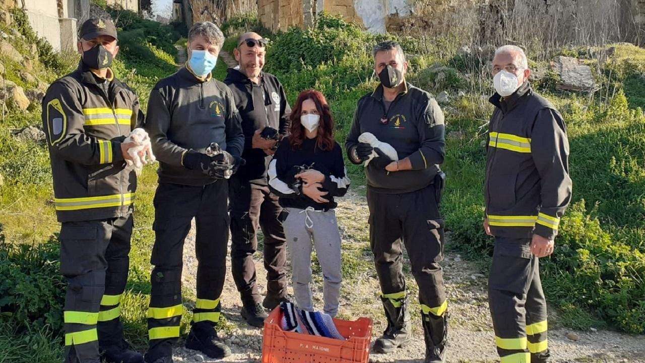 Cuccioli di cane lanciati in un pozzo e salvati dai Vigili del fuoco <font color=