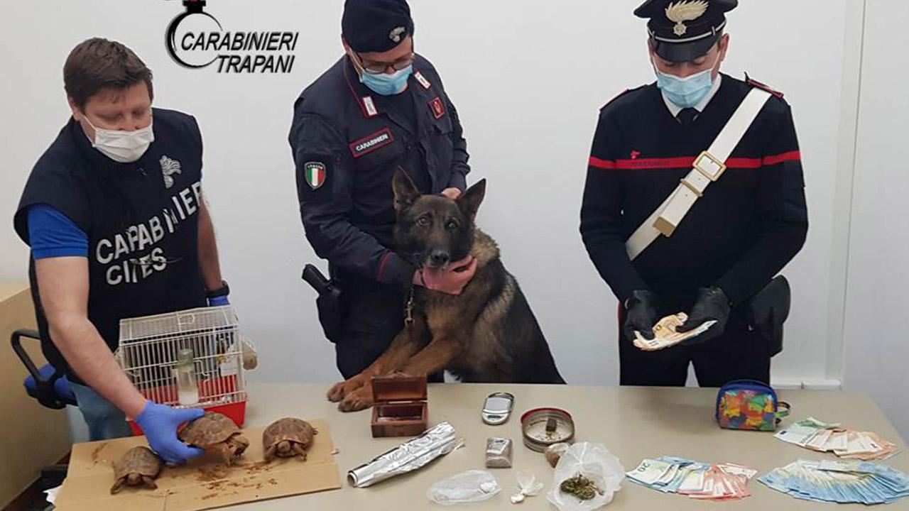 Erice, famiglia deteneva illegalmente droga e animali protetti. Due arresti