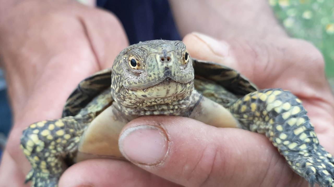 Trovata tartaruga