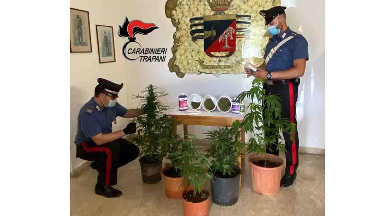 Coltiva piante di cannabis, arrestato 42enne di Petrosino