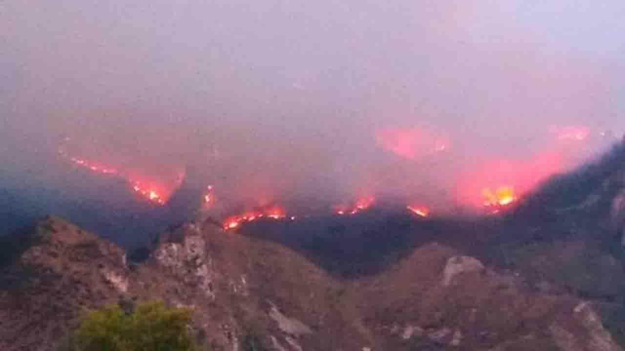 Continua la devastazione da parte di sciacalli. A fuoco diversi ettari di bosco a Burgio