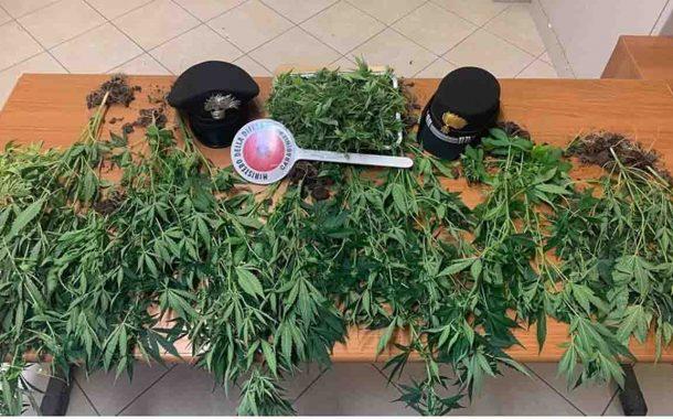Coltivavano droga a casa, arrestata coppia favarese