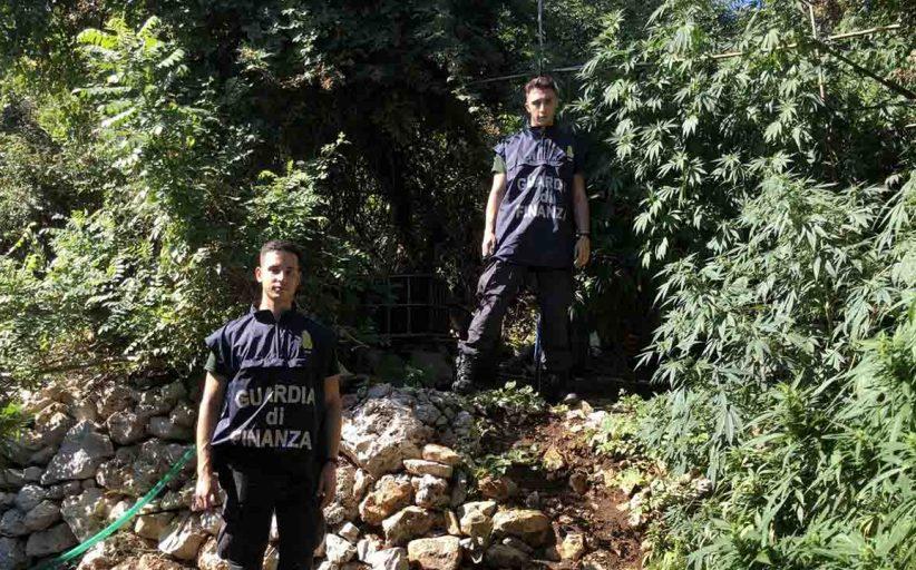 Salemi, sequestrata piantagione di cannabis indica