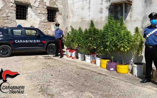 Trapani, coltiva piante di marijuana: arrestato 51enne