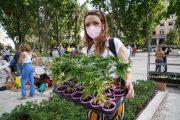 Cannabis, raggiunte 500.000 firme per referendum legalizzazione