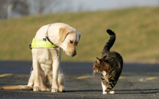 La Giunta approva progetto di fattibilità tecnica per la realizzazione di struttura per il ricovero di cani e gatti