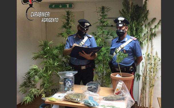 Cammarata, coltivava piante di cannabis: arrestato 27enne <font color=