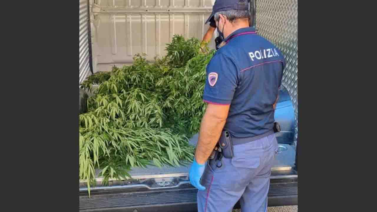 Messina, 2 kg di  marijuana in casa e 21 piante in terreno, arrestato. Polizia riceve segnalazione grazie a Youpol