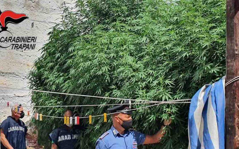 Marsala, marijuana coltivata in casa: in manette 56enne
