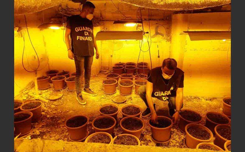 Palermo, serra di marijuana nello scantinato di un condominio. Si accedeva da una botola
